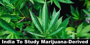 for all defence aspirants India To Study Marijuana-Derived Drugs -NCA ACADEMY